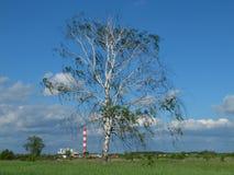 Árbol de abedul solo con el fondo industrial Fotos de archivo