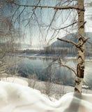 Árbol de abedul solo en la cuesta bajo costa costa del río del invierno Foto de archivo