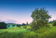 Árbol de abedul solo en un valle de Crimea Fotografía de archivo