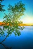 Árbol de abedul solo que crece en una charca en la salida del sol Foto de archivo