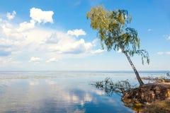 Árbol de abedul solo que hace una pausa el lago Imagen de archivo libre de regalías