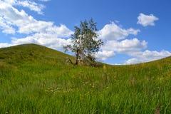 Árbol de abedul verde roto paisaje del verano de la montaña Fotos de archivo