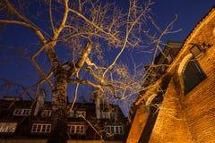 Árbol de abedul viejo iluminado en la noche Fotos de archivo libres de regalías