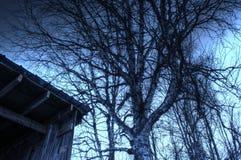 Árbol de abedul viejo poderoso al lado de la vieja estructura resistida Fotografía de archivo libre de regalías