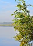 Árbol de abedul y agua del lago Fotos de archivo libres de regalías