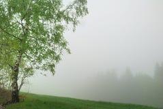 Árbol de abedul en niebla Foto de archivo libre de regalías