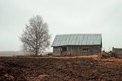 Árbol de abedul y casa del granero en un día de primavera lluvioso Foto de archivo