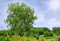 Árbol de abedul y cielo nublado de la luz del sol Foto de archivo