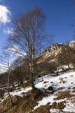 Árbol de abedul y lado occidental del pico de Grigna, Italia Imagenes de archivo