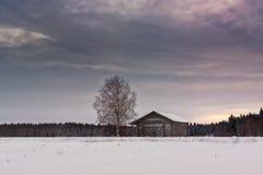 Árbol de abedul y una casa vieja del granero Fotos de archivo libres de regalías