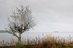 Árbol de abedul y una isla Fotos de archivo