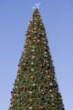 Árbol de abeto Fotos de archivo