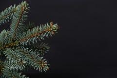 Árbol de abeto con el espacio para los saludos Imagen de archivo libre de regalías