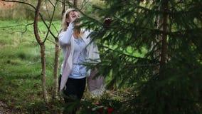 Árbol de abeto conmovedor de la mujer joven almacen de metraje de vídeo