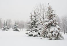 Árbol de abeto cubierto con nieve Imagen de archivo