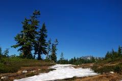 Árbol de abeto de douglas en la montaña Imagenes de archivo