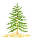 Árbol de abeto de la acuarela, mano dibujada y pintada Fotografía de archivo libre de regalías