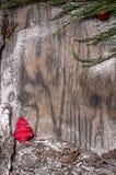 Árbol de abeto de la Navidad con la decoración y la nieve Fotografía de archivo libre de regalías