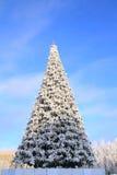 Árbol de abeto del invierno imágenes de archivo libres de regalías