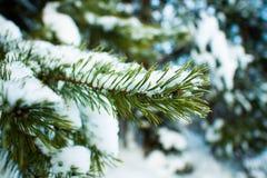 Árbol de abeto del invierno Foto de archivo