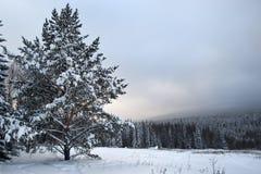 Árbol de abeto distinto en un campo de nieve Imagen de archivo