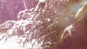 Árbol de abeto en llamarada roja del bosque del parque del invierno almacen de metraje de vídeo