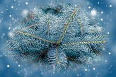 Árbol de abeto, fondo para el diseño de la Navidad Imagen de archivo