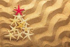 Árbol de abeto hecho de las estrellas de mar en fondo de la arena Imagen de archivo libre de regalías