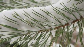 Árbol de abeto hermoso cubierto con la nieve, cierre encima de la visión metrajes