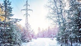 Árbol de abeto de la puesta del sol de la tarde de la helada del bosque del invierno del abeto y del abedul del pino Fotos de archivo