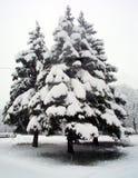 Árbol de abeto nevado Imágenes de archivo libres de regalías