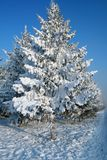 Árbol de abeto nevado Foto de archivo libre de regalías