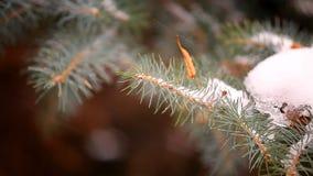 Árbol de abeto nevado metrajes