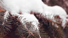 Árbol de abeto nevado almacen de metraje de vídeo