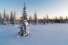 Árbol de abeto nevado en el fondo del bosque en invierno Foto de archivo