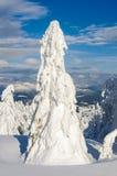 Árbol de abeto nevado solo Foto de archivo libre de regalías