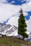 Árbol de abeto por las montañas Imagen de archivo libre de regalías