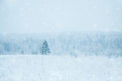 Árbol de abeto solo en un campo nevoso Foto de archivo libre de regalías
