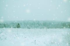 Árbol de abeto solo en un campo nevoso Fotografía de archivo