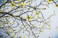 Árbol de almendra de Malabar Fotos de archivo libres de regalías
