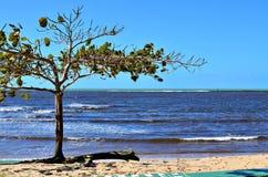 Árbol de almendra por el mar Fotos de archivo
