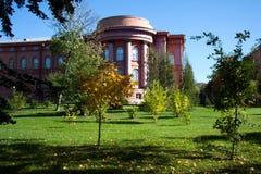 Árbol de arce con las hojas de oro en prado verde en jardín del patio trasero de la universidad fotos de archivo
