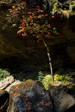 Árbol de arce debajo de la cascada Fotografía de archivo