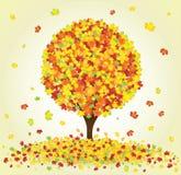 Árbol de arce del otoño Foto de archivo libre de regalías