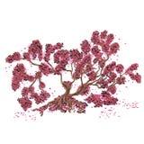 Árbol de arce del otoño con las hojas que caen Fotografía de archivo libre de regalías