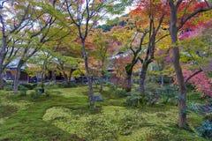 Árbol de arce rojo japonés durante otoño en jardín en el templo de Enkoji en Kyoto, Japón Imagen de archivo