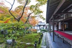 Árbol de arce rojo japonés durante otoño en jardín en el templo de Enkoji en Kyoto, Japón Imagenes de archivo