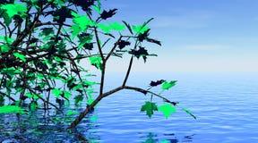 Árbol de arce y agua hermosa libre illustration