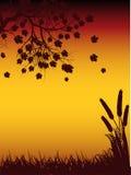 Árbol de Autmun y silueta del maíz imagenes de archivo