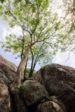 Árbol de Beautyful en las rocas Imagen de archivo